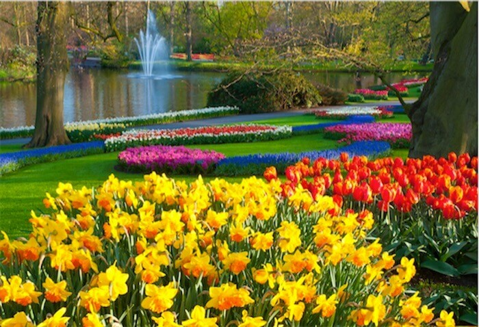 Keukenhof parque tulipanes Holanda