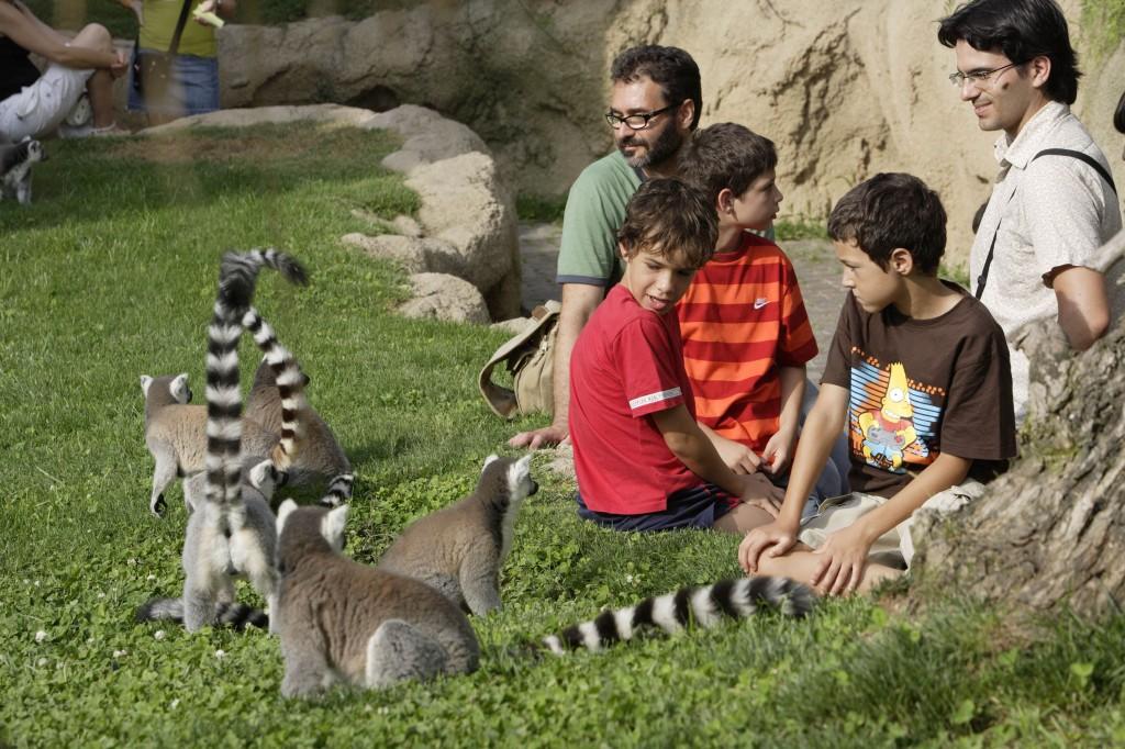 Bioparc Valencia - Lemurs in Madagascar