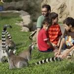 ¡Gana un plan niños en plena naturaleza! Disfruta de Bioparc Valencia