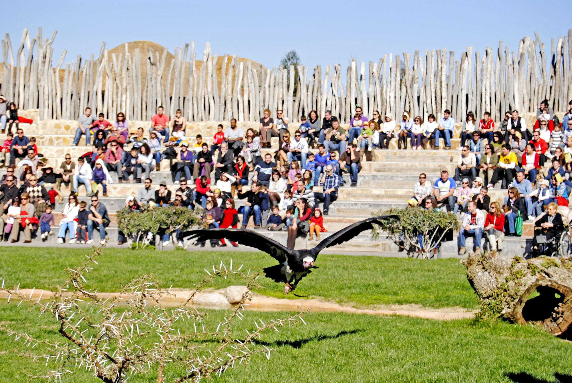 Bioparc Valencia exhibición de aves y mamíferos