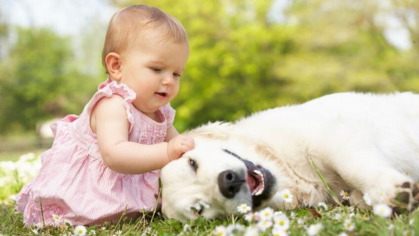 bebés y mascotas perro