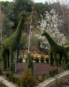 El Bosque Encantado es un Jardín Botánico