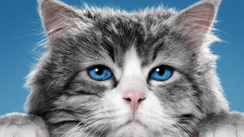 gato siete vidas pelicula