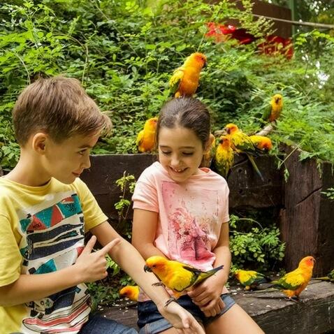 Aves en Mundomar visitar con niños