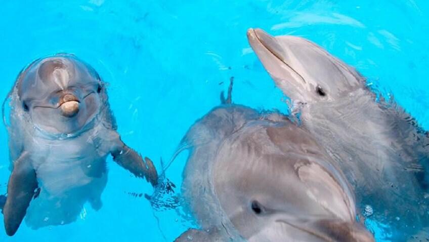 Disfruta de los shows y de nadar con delfines en Mundomar Benidorm
